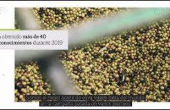Oleum Hispania, el aceite de 'la Roja' que triunfa ya en 22 mercados internacionales