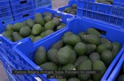 Tropical Millenium proyecta avanzar en nuevos mercados internacionales a través de delegaciones propias