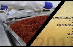 Triselecta comercializa nueve toneladas de azafrán anuales en los mercados internacionales