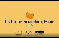 Los cítricos en Andalucía