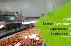 Hudisa: La mayor procesadora de frutos rojos del Sur de Europa está en Lepe
