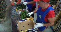 Empresa Sigfrido Fruit